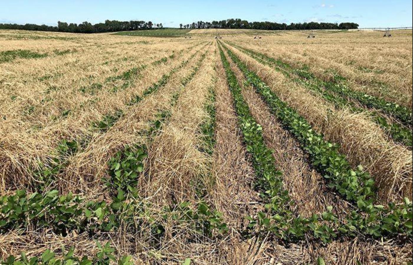Regenerative agriculture emulates natural system